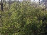 Zelen okolo chaty
