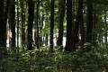 Výprava v Krčském lese