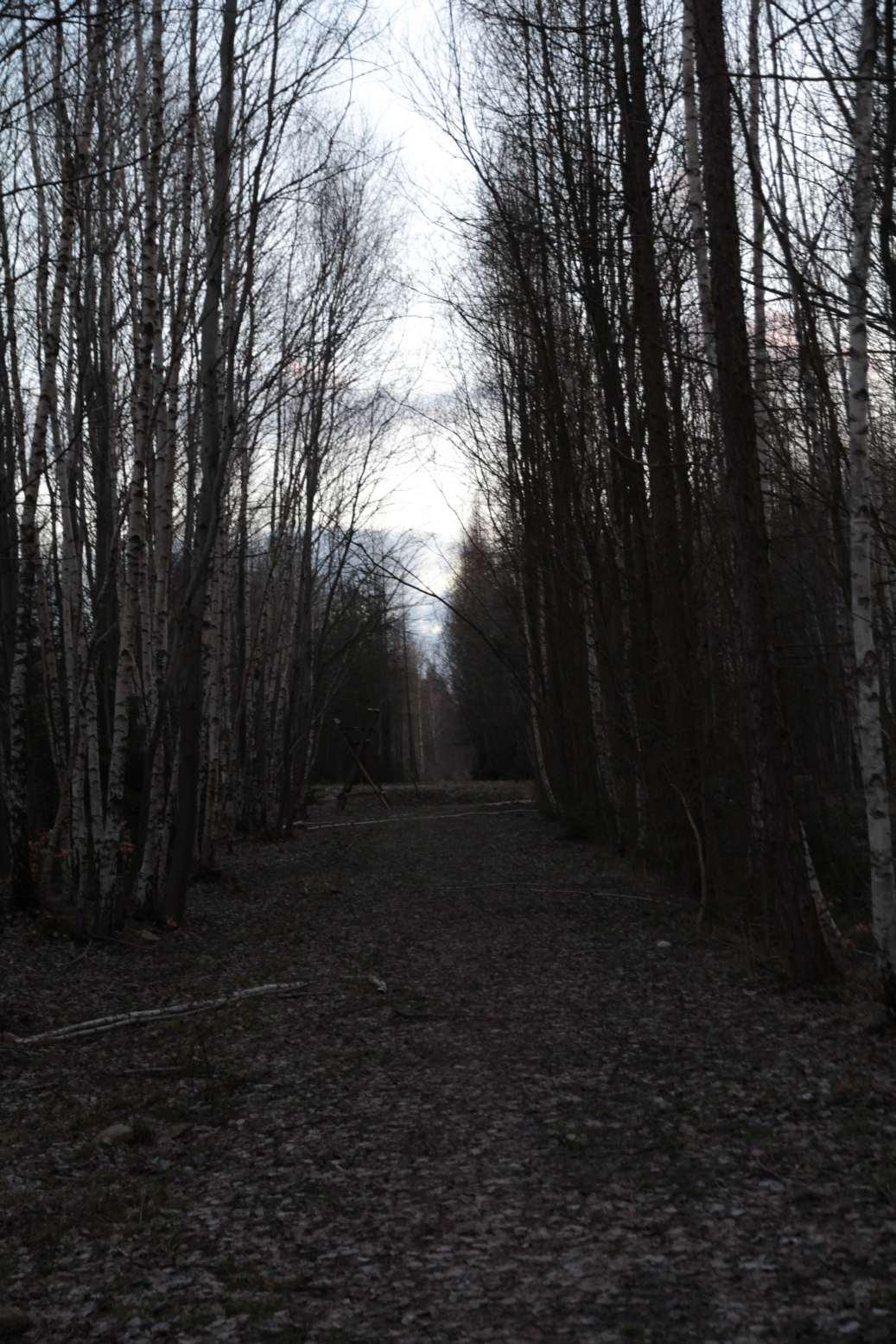 Cesta na základně je lemovaná břízkami