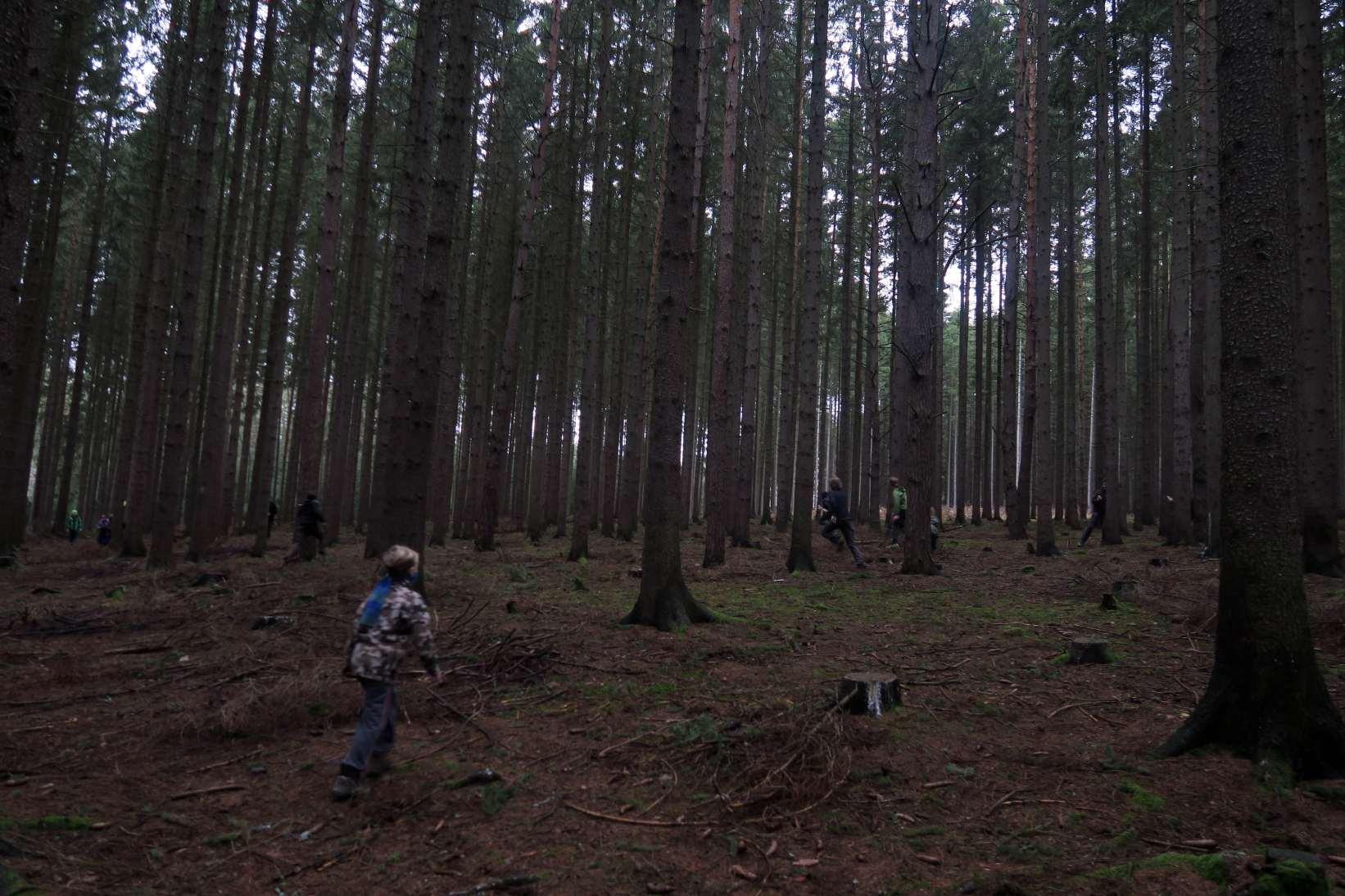 Strelovka v lese