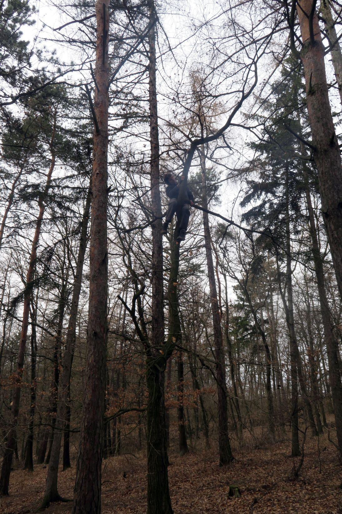 Jimmy si osedlal strom v pěkné výšce