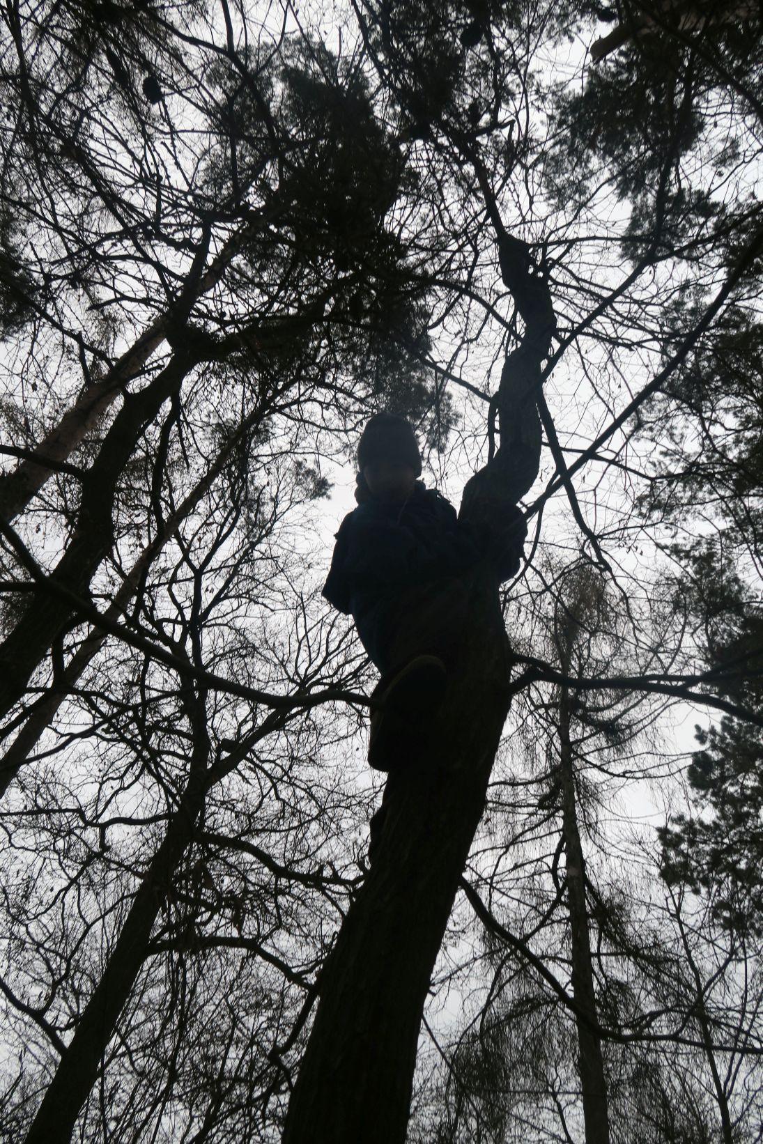 Hádejte který Alex je už zase na stromě